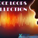 Vox Loops — Голосовые сэмплы