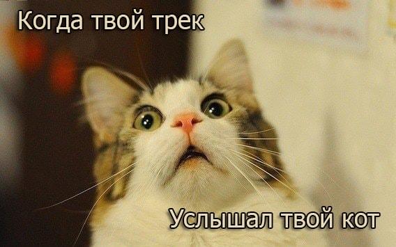 Смешной кот слушает трек